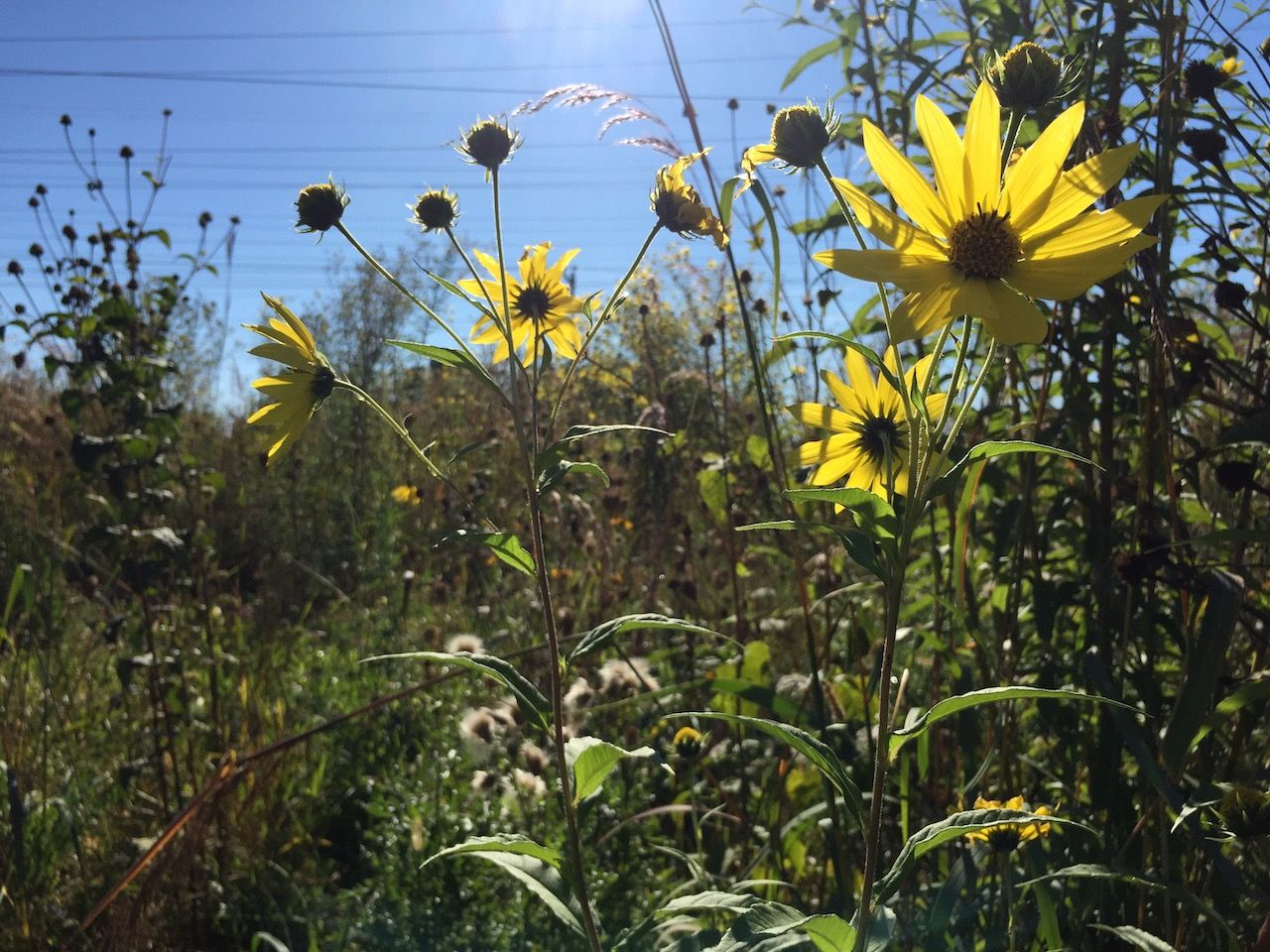 Naturalized meadow. Credit: Jake Tobin Garrett